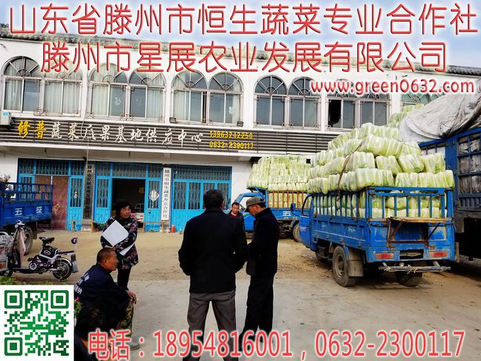山东枣庄滕州大坞白菜